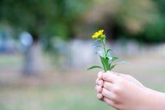 Il bambino ha selezionato un fiore e vuole darlo Un fiore nelle mani dei bambini immagine stock