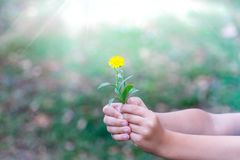 Il bambino ha selezionato un fiore e vuole darlo Un fiore nelle mani dei bambini fotografia stock libera da diritti