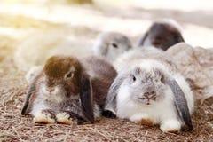 Il bambino Olanda pota il coniglio in parco Fotografia Stock Libera da Diritti