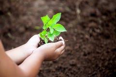 Il bambino passa la piantatura dell'albero giovane su suolo nero Fotografia Stock Libera da Diritti