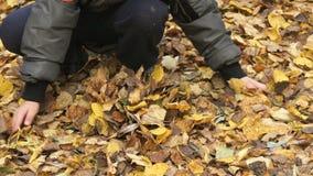 Il bambino raccoglie il vostro fogliame giallo di autunno delle mani video d archivio