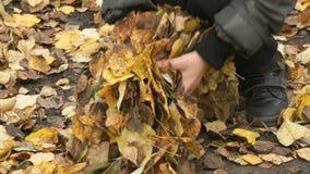 Il bambino raccoglie il vostro fogliame giallo di autunno delle mani archivi video