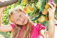 Il bambino (ragazza) è di melo vicino. Immagini Stock Libere da Diritti