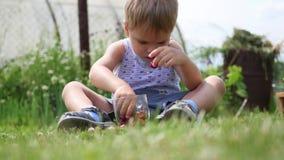 Il bambino si siede sul prato inglese e mangia le bacche rosse bacche Victoria del giardino archivi video