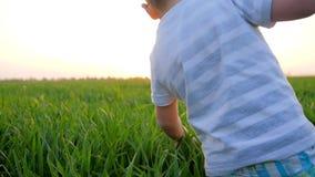 Il bambino sta camminando lungo il campo e tocca l'erba verde contro il cielo brillantemente d'ardore archivi video