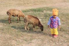 Il bambino sta giocando con due pecore Fotografia Stock