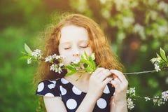 Il bambino sta odorando il ramo di fioritura della ciliegia Immagine Stock Libera da Diritti