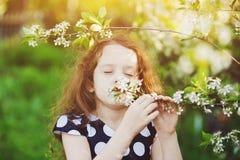 Il bambino sta odorando il ramo di fioritura della ciliegia Immagini Stock Libere da Diritti