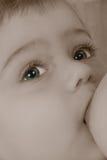 Il bambino succhia un seno Fotografia Stock