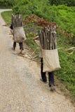 Il bambino trasporta la legna da ardere, Laos Fotografie Stock Libere da Diritti