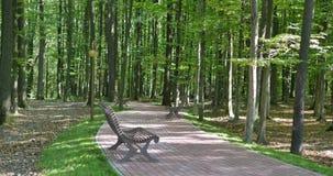 Il banco di legno vuoto al vicolo del parco, cespugli soleggiati e verdi è dietro il banco, foglie asciutte di giallo sulla terra stock footage