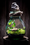 Il barattolo meraviglioso con il pezzo di foresta, conserva l'idea della terra Fotografia Stock