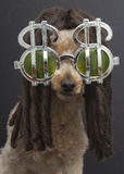 Il barboncino con teme e simboli di dollaro Fotografia Stock