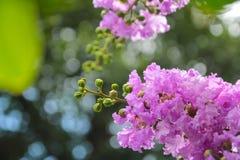Il beauti di un fiore rosa Fotografie Stock