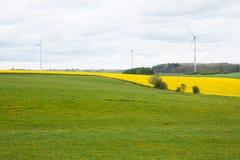 Campi del Belgio con le turbine di vento e del seme di ravizzone Immagini Stock