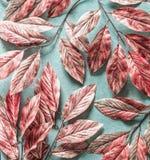 Il bello albero bianco rosa lascia il modello su fondo blu pastello, la vista superiore, disposizione piana fotografia stock