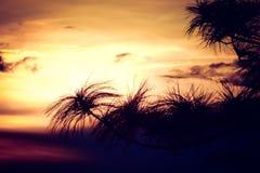 Il bello albero lascia la siluetta al tramonto Fotografia Stock Libera da Diritti