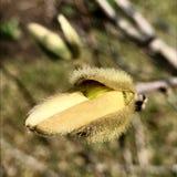 Il bello albero vivente con il lotto delle foglie sui rami sporge dalla pianta di legno fotografia stock