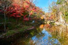 Il bello autunno scenico immagini stock libere da diritti