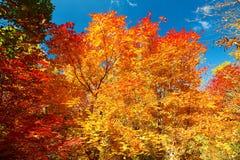 Il bello autunno scenico immagini stock