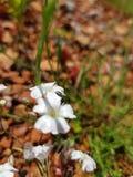 il bello bianco da xN8bird fotografia stock