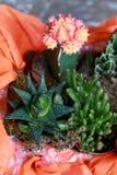 Il bello cactus arancio e una pietra sono aumentato in un vaso fotografia stock libera da diritti
