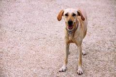 Il bello cane attende il suo proprietario sulla via fotografia stock