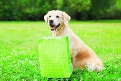 Il bello cane di golden retriever sta tenendo un sacchetto della spesa verde nei denti su un'erba il giorno di estate Fotografia Stock Libera da Diritti