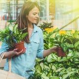 Il bello cliente della ragazza sceglie le piante di ficus nella vendita al dettaglio Facendo il giardinaggio nella serra fotografia stock libera da diritti