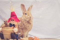 Il bello coniglio colorato Rufus si siede verticalmente accanto alla decorazione dello spaventapasseri di autunno con fondo sempl immagini stock libere da diritti