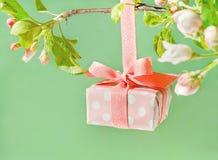 Il bello contenitore di regalo avvolto con la mela della molla sboccia Fotografie Stock