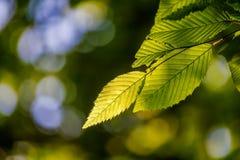 Il bello, dettaglio armonioso della foresta, con il carpino va immagine stock
