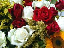 Il bello fiore Immagini Stock Libere da Diritti