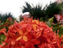 Il bello fiore Fotografia Stock