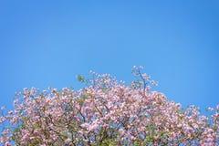 Il bello fiore e bluesky in natura Fotografie Stock