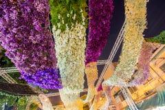 Il bello fiore incurva in fiore del ` per attività del ` del padre per essere informato di re Bhumibol Adulyadej della Sua Maestà Immagini Stock