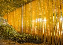 Il bello fiore incurva in fiore del ` per attività del ` del padre per essere informato di re Bhumibol Adulyadej della Sua Maestà Fotografia Stock Libera da Diritti