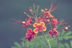 Il bello fiore sul fuoco selettivo e sul fondo confusi Fotografia Stock Libera da Diritti