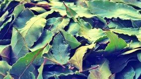 Il bello fondo con le foglie asciutte della baia si chiude su immagine stock