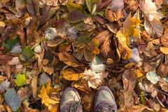Il bello fondo di autunno di giallo va sulla terra Fotografia Stock