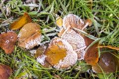 Il bello fondo di autunno di giallo va sulla terra Immagini Stock