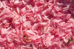 il bello fondo fiorisce la struttura della tenerezza della molla Fotografia Stock Libera da Diritti
