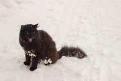 Il bello gatto nero lanuginoso con giallo osserva sull'inverno bianco della neve Fotografia Stock