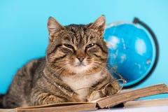 Il bello gatto si trova su un libro aperto gatto con i vetri e un libro immagini stock