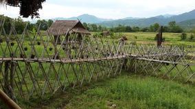 Il bello giacimento del riso nella provincia di Nan, Tailandia Immagine Stock Libera da Diritti