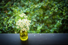Il bello giardino della primavera o dell'estate con la margherita fiorisce sulla tavola di legno Immagine Stock