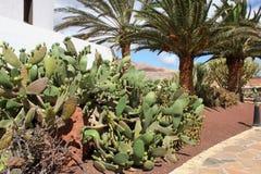 Il bello giardino Le Isole Canarie, Spagna Fotografia Stock