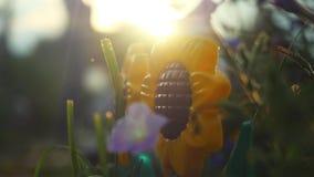 Il bello girasole variopinto ed altri fiori di estate fanno il giardinaggio al rallentatore con gli effetti del chiarore del lens archivi video