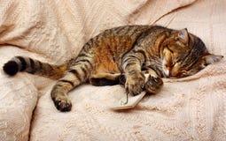 Il bello grande gatto ha dormito con la trappola per topi e un topo del giocattolo immagine stock libera da diritti