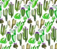 Il bello insieme di erbe floreale tropicale messicano adorabile astratto sveglio luminoso di verde dell'estate di una pittura del Fotografia Stock